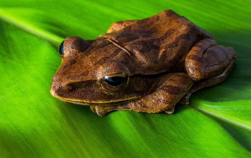 tree-frog-324553_1920