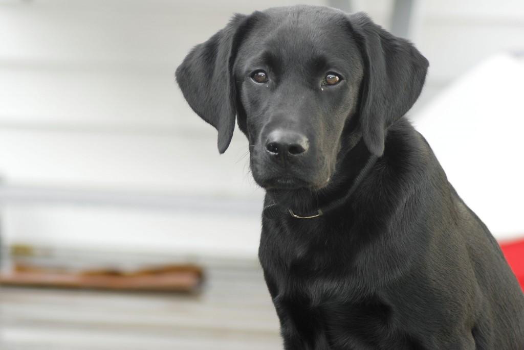 dog-862937_1920