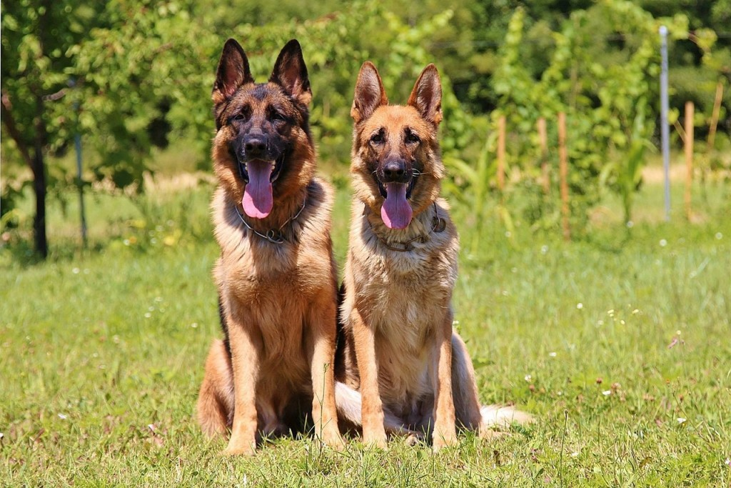 dogs-888415_1280