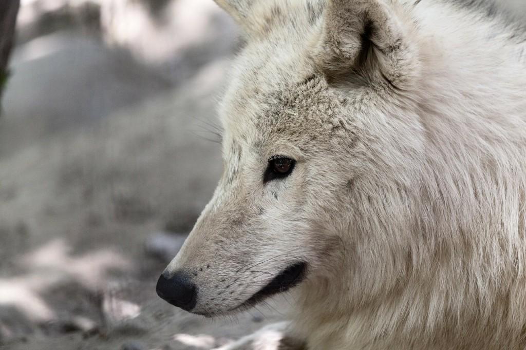animal-164537_1280