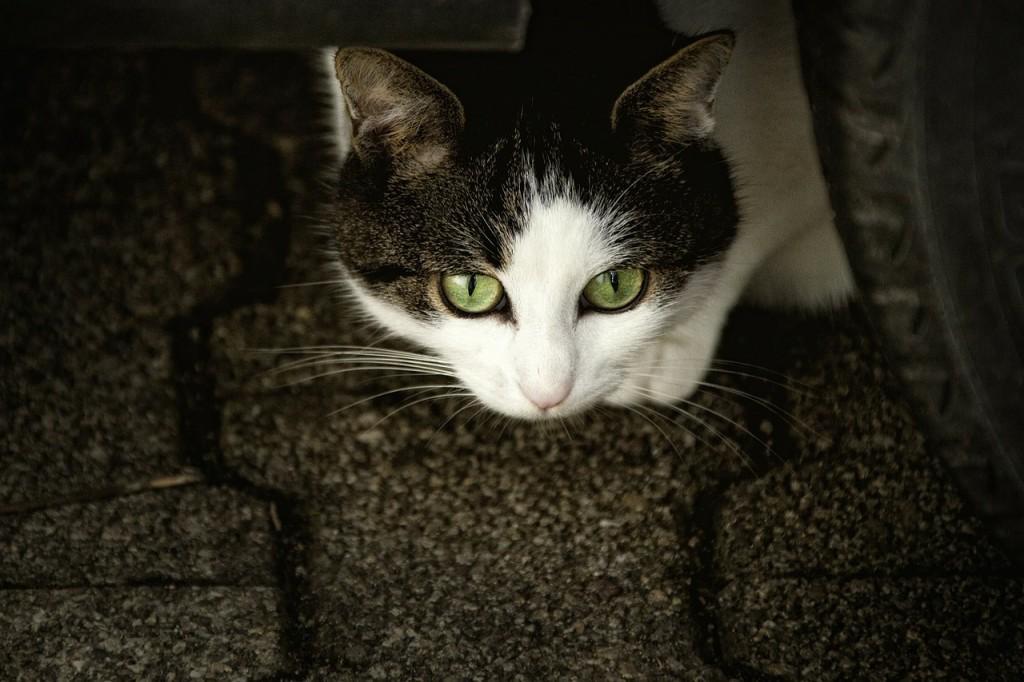 cat-207583_1280