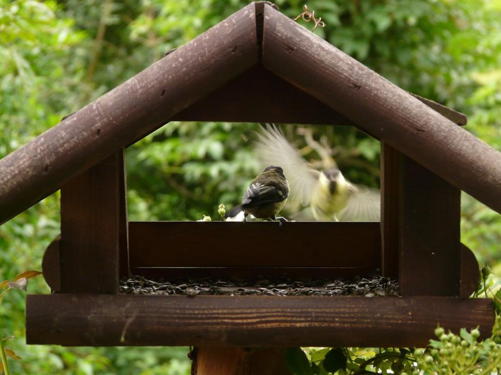aviary-8178_1280