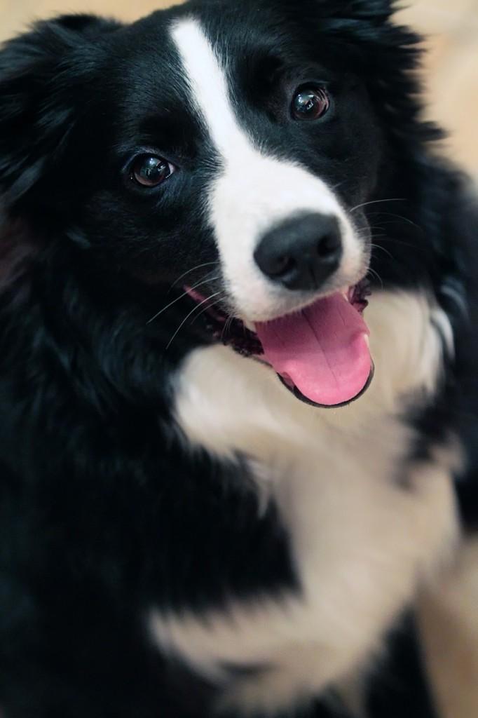 dog-544736_1280