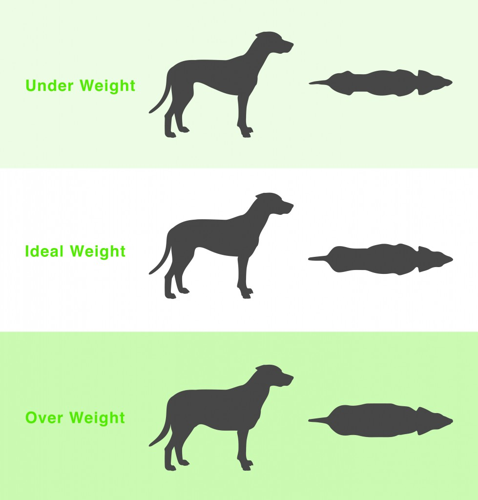 How to tell if your dog is a healthy weight dog weight chart nvjuhfo Gallery