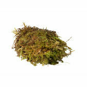 Monkfield Live Sphagnum Moss Substrate