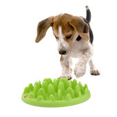 Green Interactive Mini Slow Feeder