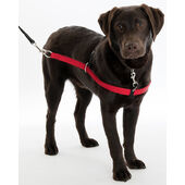 Red Walkezee Dog Harness