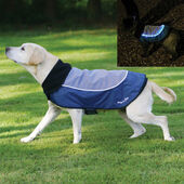 Rosewood Night Bright LED Light Up Dog Jacket