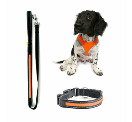 The Pet Express Winter Glow In The Dark Dog Lead/Harness/Collar Bundle