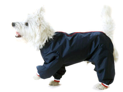 Cosipet Navy Blue Dog Trouser Suit