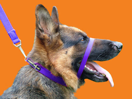 Canny Dog Collar - Purple